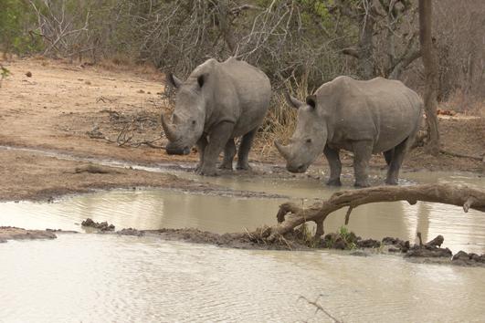 Picture-15_Wildlife-cons_Rhinos