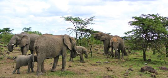 Picture-16_Wildlife-cons_Elephants-feeding